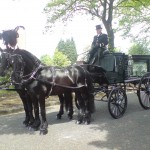 Black Horse Drawn Hearse with Black Friesian Stallions