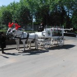 White Horse Drawn Hearse With Grey Gelderlanders
